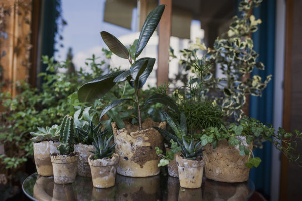 Różne rośliny, rosnące w glinianych doniczkach o nieregularnych krawędziach.