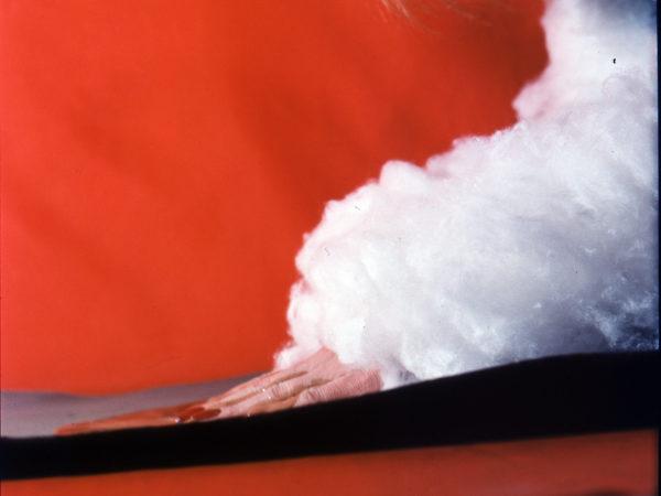 Dłoń kobiety z długimi paznokciami pomalowanymi na czerwono, dalsza część ręki owinięta jest watą. W tle znajduje się czerwony materiał.